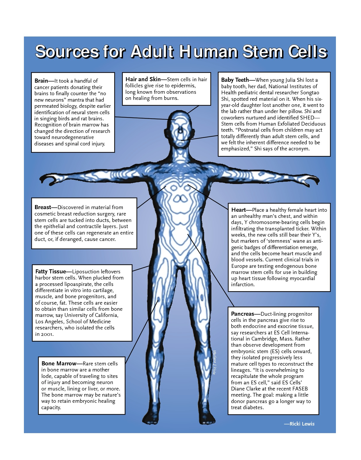 Adult stem cell sources
